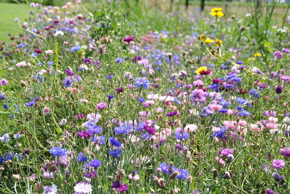 duurzaam tuinieren biodiversiteit - Van der Waal Tuinen hoveniersbedrijf