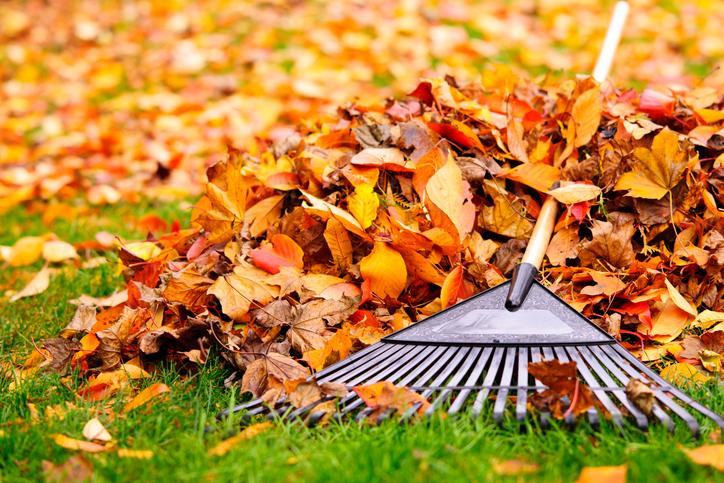 tuintips herfst tuinonderhoud hovenier Van der Waal